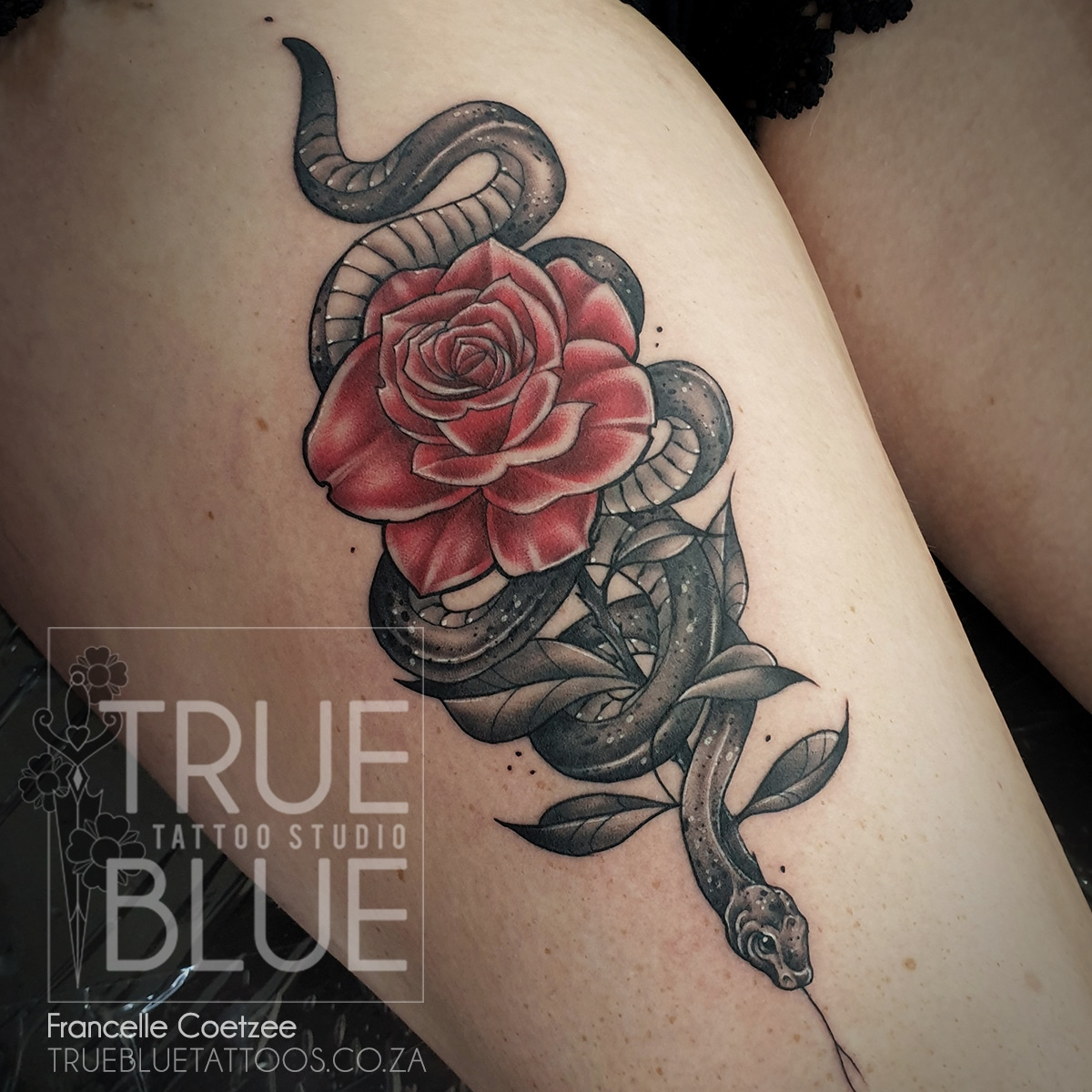 Tattoo-Francelle-Coetzee-Black-and-Grey-Color-Animals-Flower-Snake-Rose
